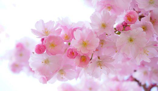 三重県の桜名所2020!人気のお花見スポット8選と見頃のご紹介