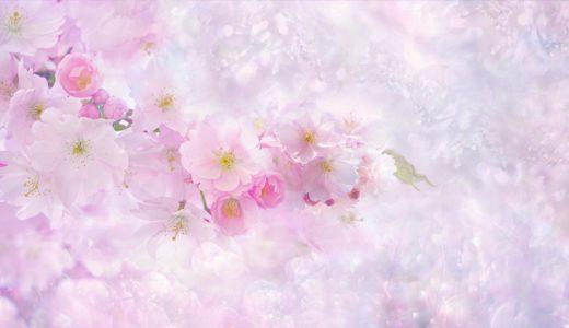 三重の桜が綺麗な名所!おすすめスポット・見頃・駐車場・祭り19選