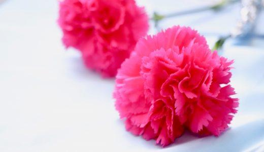 カーネーション「母の日のプレゼント」長持ち!来年も咲かせる育て方