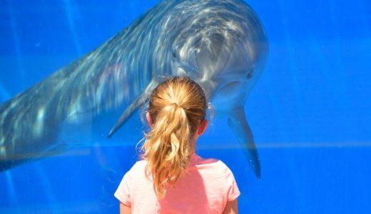 東海地方の水族館!大人も子ども楽しめる絶対外さないおすすめ3選は