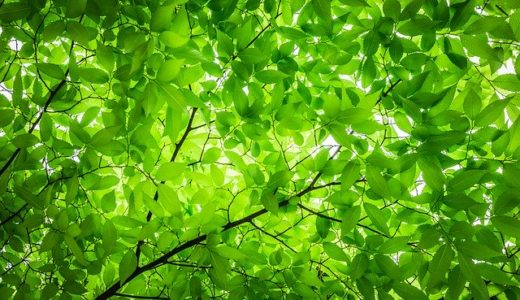 「にぎわいの森」いなべ市の混雑状況!おすすめの人気店3選をご紹介