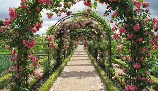 三重のバラ園を楽しむバラまつりと見頃は!おすすめ4選とバラの特徴