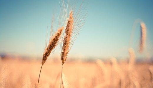 小麦の奴隷名古屋千種店の場所や混雑状況、評判クチコミまとめ